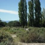 Rumgaloppierende Esele